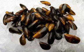Scottish Shellfish production on the increase