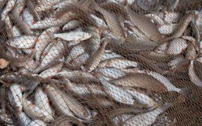 GREENPEACE TARGETS TOP FISHERS