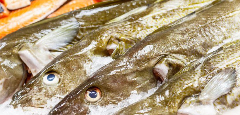 Seafood Week sets sail