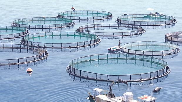 Short course in fisheries and aquaculture