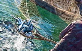 EC WELCOMES NEW MULTI ANNUAL FISHERIES PLAN