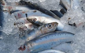 Fish rich diet helps fight asthma
