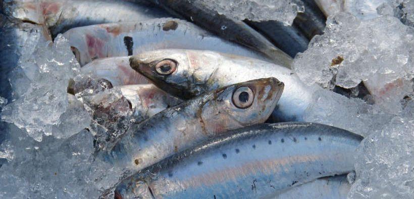 Fish rich diet helps fight asthma