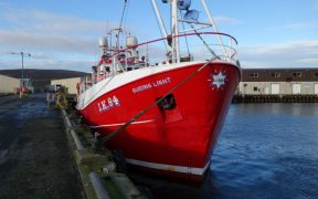 RECORD YEAR FOR SHETLAND WHITEFISH