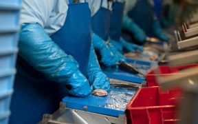 Biggest survey of The UK's Seafood Processing Sector begins