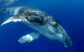 CANADA EMPHASISES IMPORTANCE OF WHALE PROTECTION