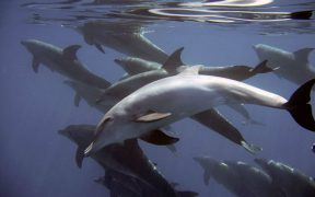 DOLPHINS ARE PASSING TOXINS TO THEIR YOUNG