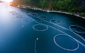 A LEAP FORWARD FOR SEAFOOD QUALITY
