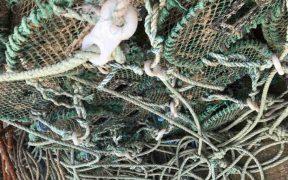 NEW MAGAZINE EXPLORES SUSTAINABLE FISHERIES