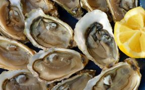 NEW ZEALAND SHELLFISH ALERT