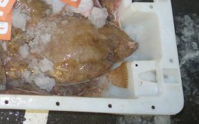 Icelandic Lemon Sole Achieves MSC Standard