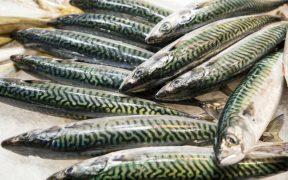 FISH STOCKS IN NE ATLANTIC RECOVERING