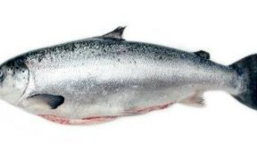 NEW STUDY FOCUSES ON SALMON SKIN HEALTH