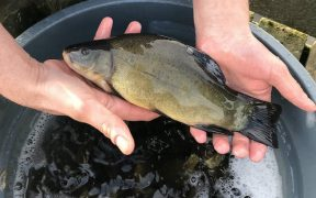 Fish stocks boost for North East stillwaters