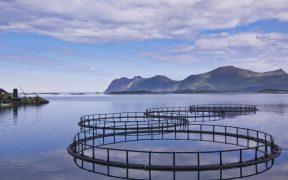 Salmon Company Inspections