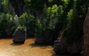 CANADIAN GOVERNMENT INVESTS IN COASTAL HABITATS