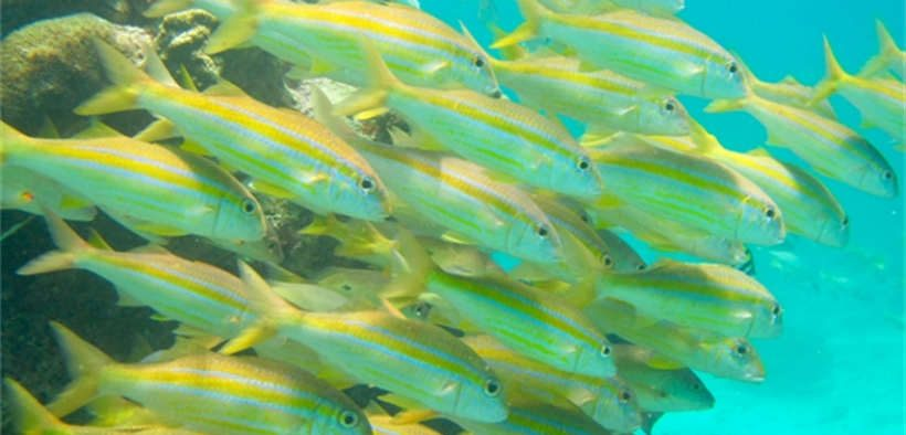 CORAL REEF PARKS CONTAIN LESS FISH BIOMASS
