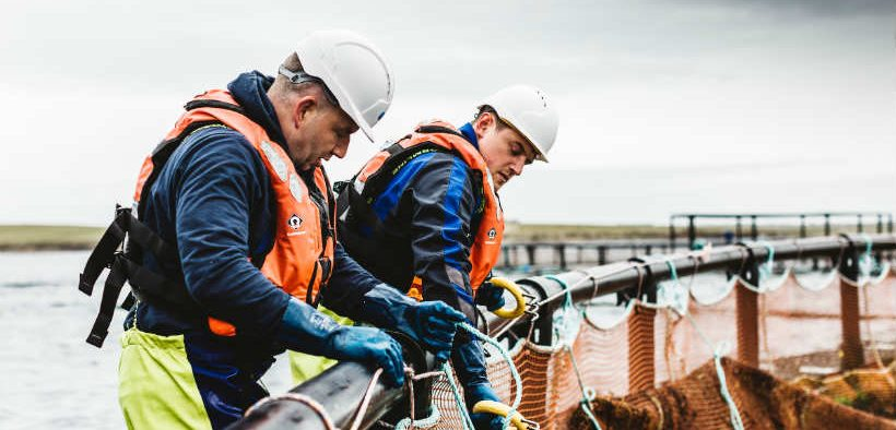 NEW SALMON FARM DELIVERS WINDFALL