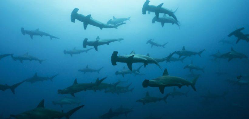 Massive underreporting of shark catches