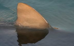 OBSERVER CALL ON BOATS TO HALT ILLEGAL SHARK FINNING
