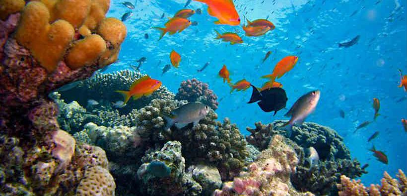 OCEAN CURRENTS BRING GOOD NEWS FOR REEF FISH