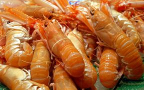 RISES FOR NORWEGIAN KING CRAB AND PRAWN EXPORTS