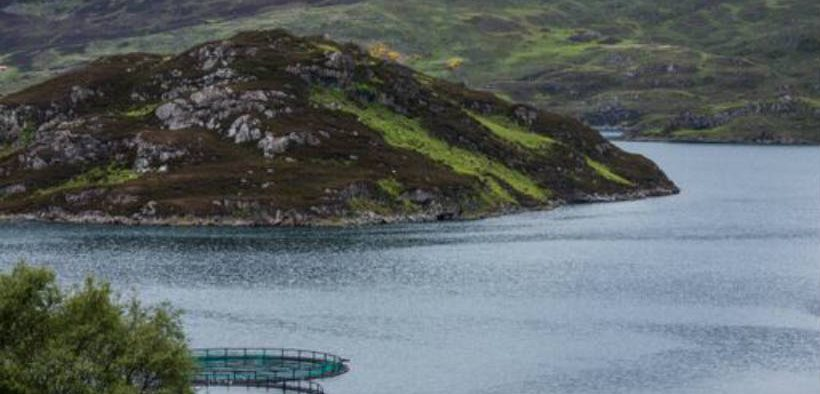 SCOTTISH FISH FARM MEDICINE IMPACT STUDY