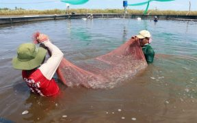 VIETNAM SHRIMP FARMER EXPANDS