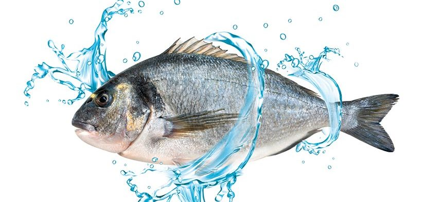 Innovative New Seabream Feed