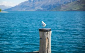 FISHERIES NZ ANNOUNCES RESEARCH PROPOSALS