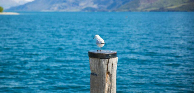 FISHERIES NZ ANNOUNCES RESEARCH PROPOSALS