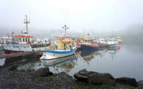 ICELANDIC CATCH VALUES SOAR