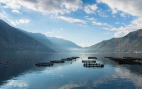AQUACULTURE INSURER WARNS