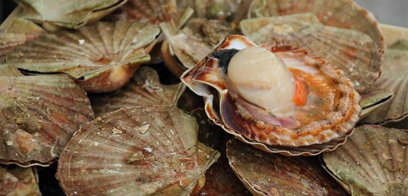 SCALLOP FISHERY IMPROVEMENT PLAN