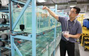 Singapore Aquaculture Innovation Centre
