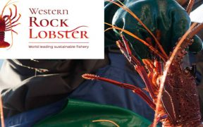 WESTERN ROCK LOBSTER BURSARY