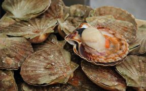 DRAFT STRATEGY FOR NZ SCALLOP