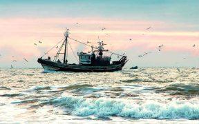 45 US FISH STOCKS REBUILT