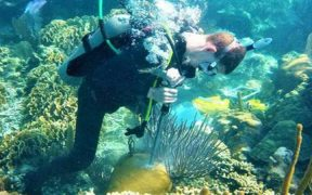CLIMATE CHANGE LEADS TO CORAL