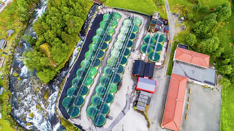RAS Companies in Strength at Aquanor | Aquaculture News