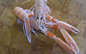 scots-seafood-processors-appeal-for-support