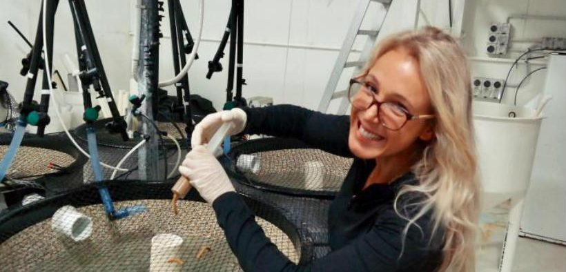 MICROPLASTICS FED TO SNAPPER