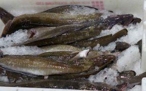 LARGEST MULTINATIONAL FISHERY
