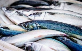 NEW SEAFOOD SUSTAINABILITY TOOL