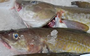 FROM FISH WASTE TO VALUE