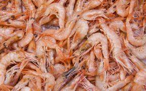 VIETNAM SEAFOOD PRODUCTION RISES