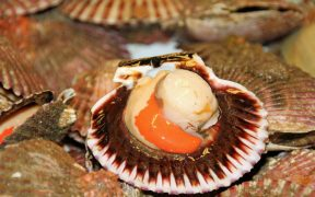 patrols-monitor-scallop-fisheries