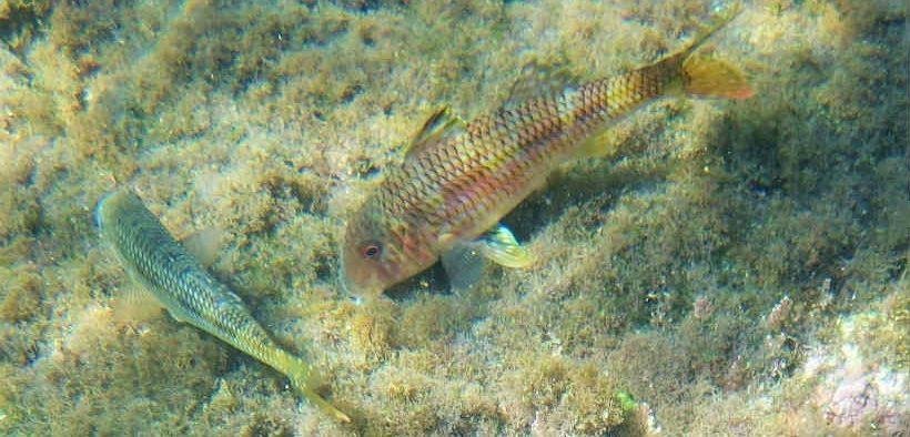 EUROPEAN FISH STOCKS MOVING