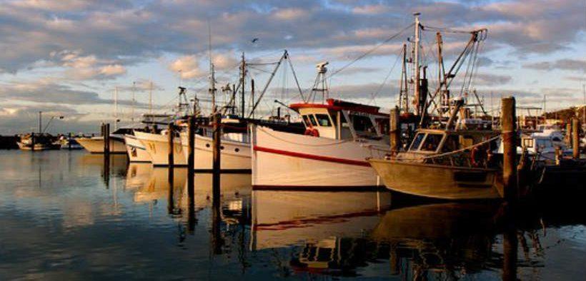 NZ SEAFOOD SUSTAINABILITY AWARDS