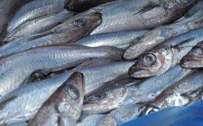NORWEGIAN BLUE WHITING FISHERY